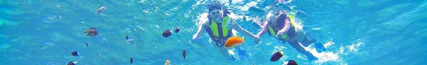 西表島珊瑚礁シュノーケル